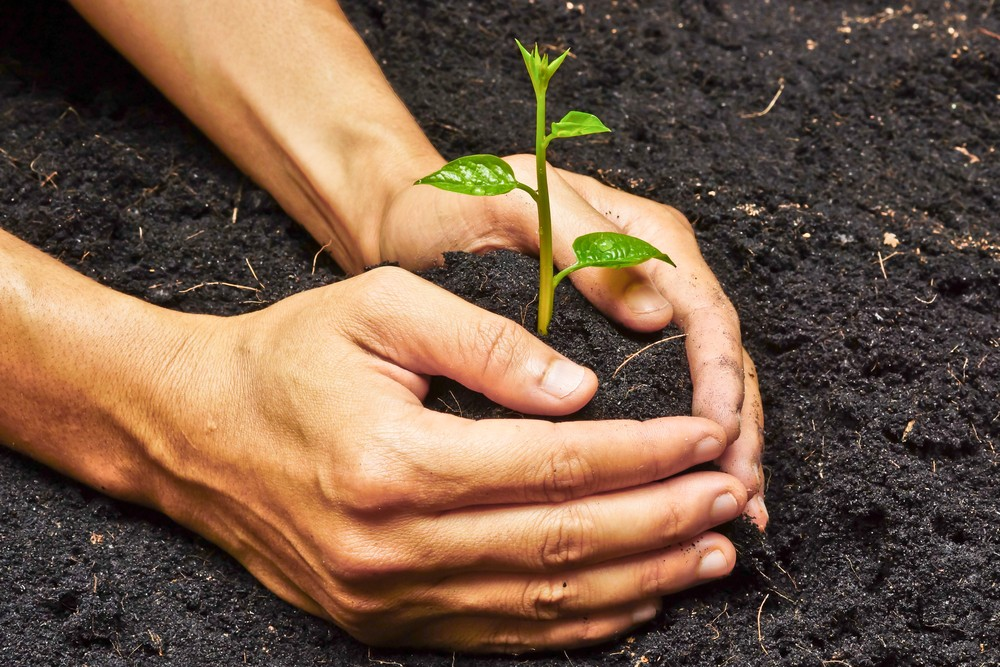 Helping companies turnover a new leaf
